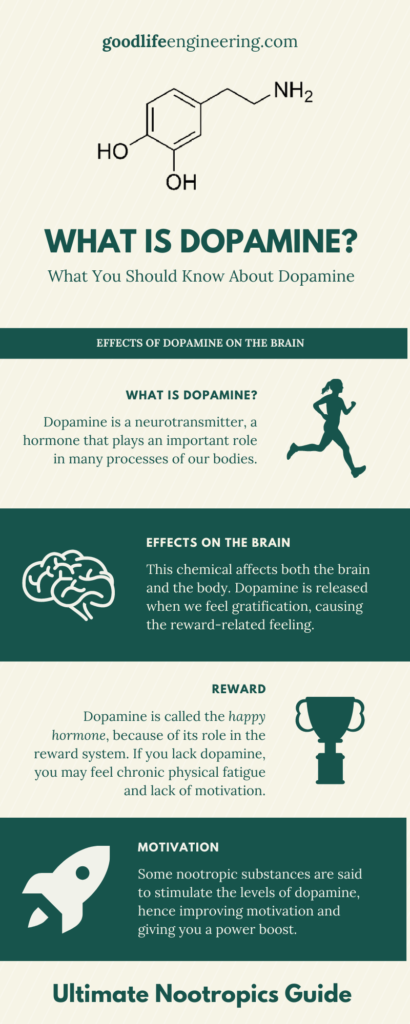 Nootropics Ultimate Guide - Memory Supplements - Goodlife Engineering - Brain Balance - Dopamine